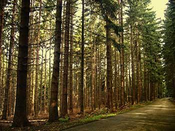 fotogrametria en madrid en bosques